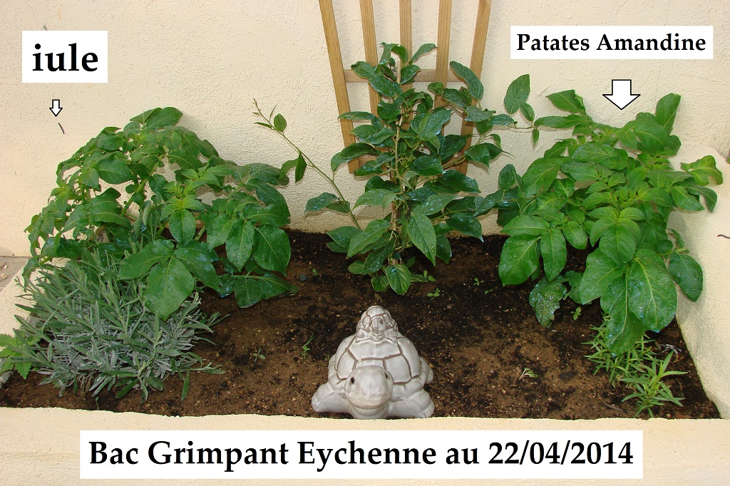Bac Grimpant Eychenne : saison 2014