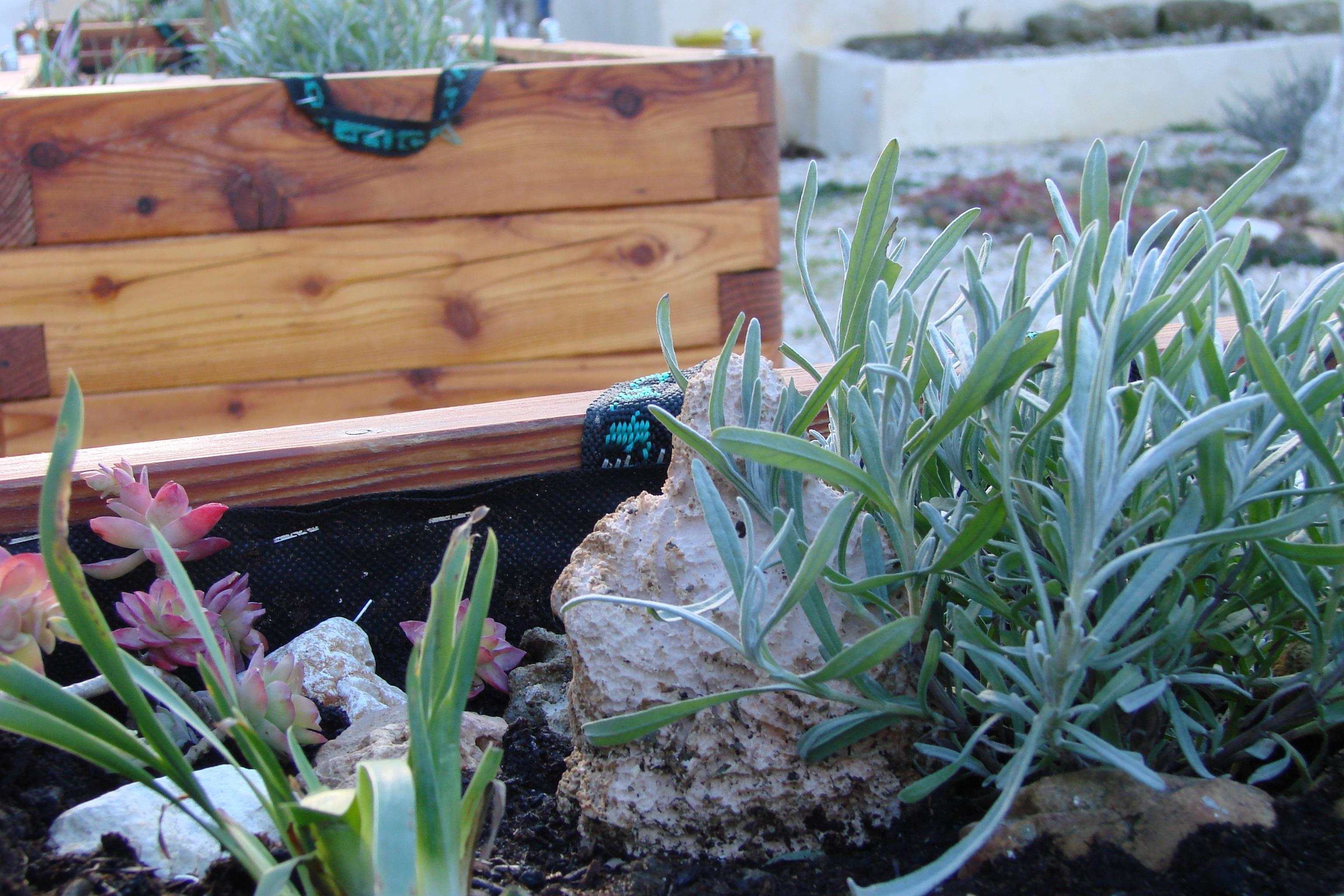Achats plantes pour les bacs mélèze