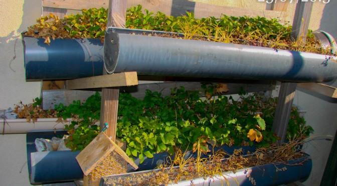 Construction d'un Rack pour une culture verticale des fraisiers Jojo