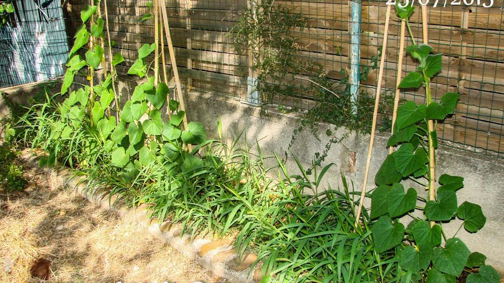 Les cornichons des voisins - DZprod Jardin - 25 juillet 2015