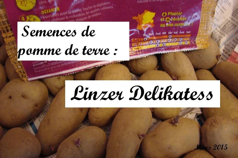 Semences Linzer Delikatess