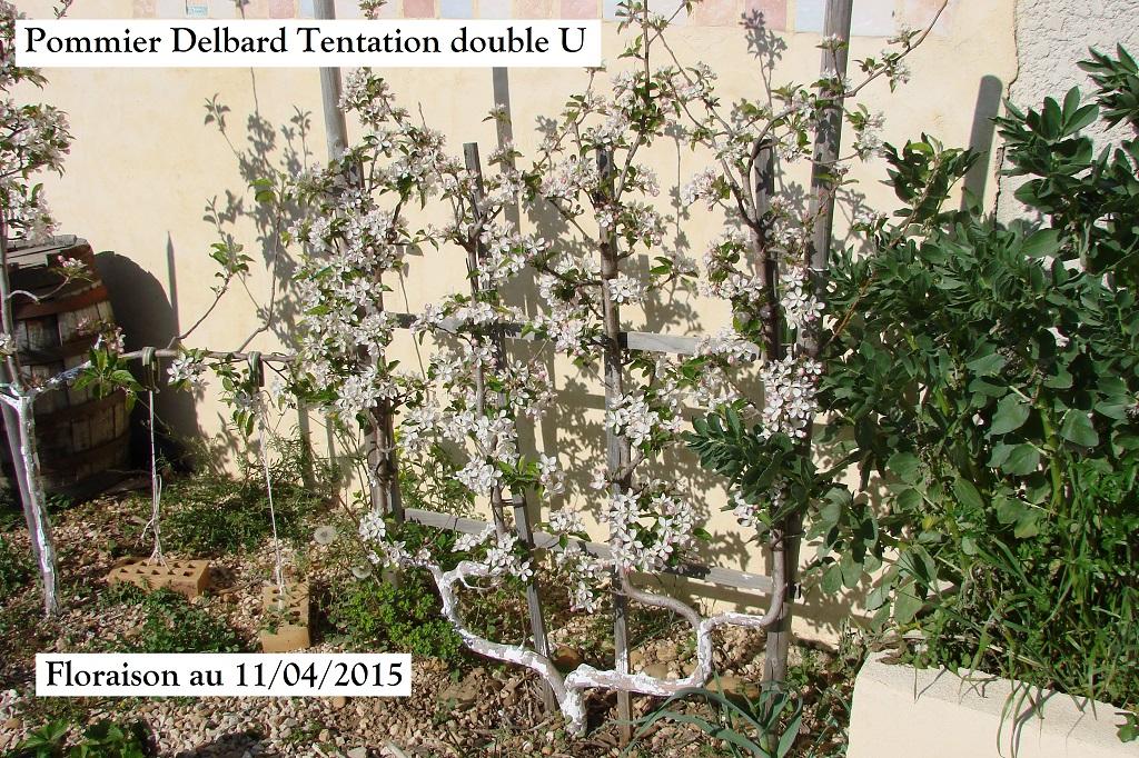 Pommier Delbard Tentation double U