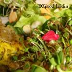 Salade laitue - graines germées en gros plan - 15-04-2015