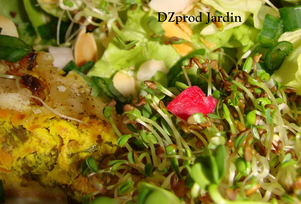 Salade laitue graines germées et tarte cebette curcuma du 15-04-2015
