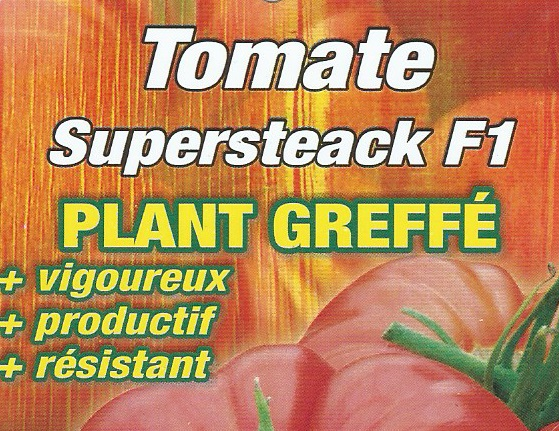 Tomate Supersteack F1 greffé