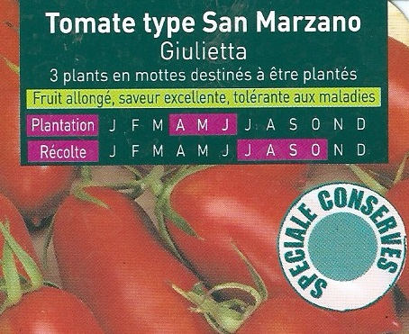 Tomate type san Marzano