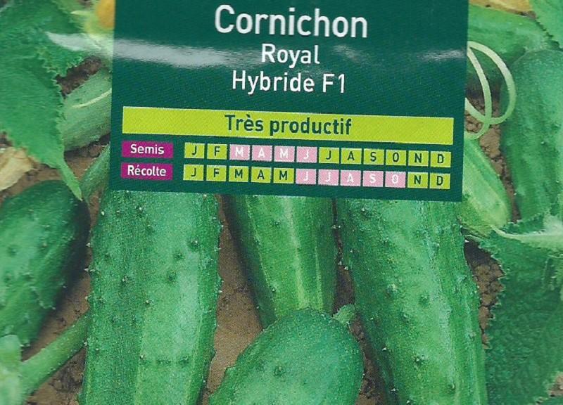 Cornichon Royal Hybride F1