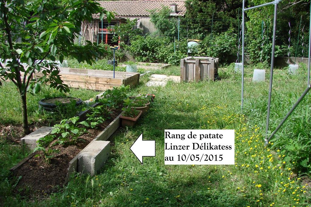 Rang de patate Linzer au 10-05-2015