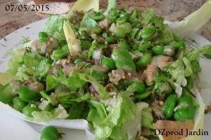 Salade de laitue Appia et fève Aquadulce du 07-05-2015