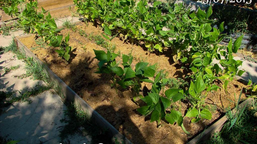 Caisson E - DZprod Jardin - 25 juillet 2015