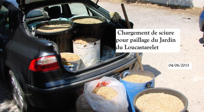 Chargement de sciure - Donnadieu - 04-06-2015