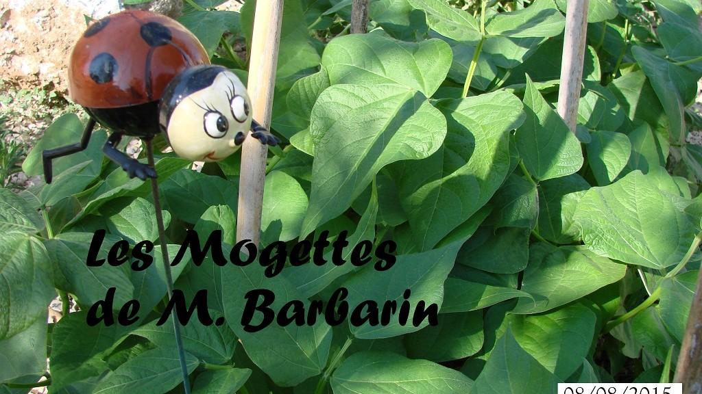 Mogette et coccinelle au 08-08-2015