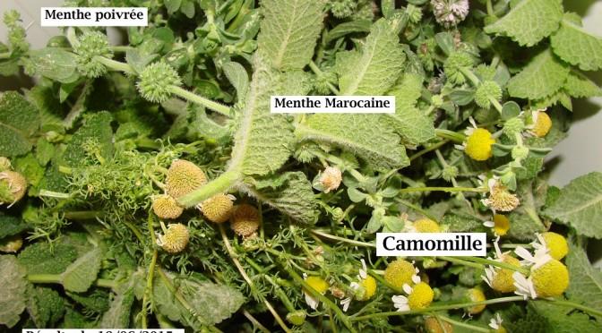 Pourquoi récolter des aromatiques dans son jardin