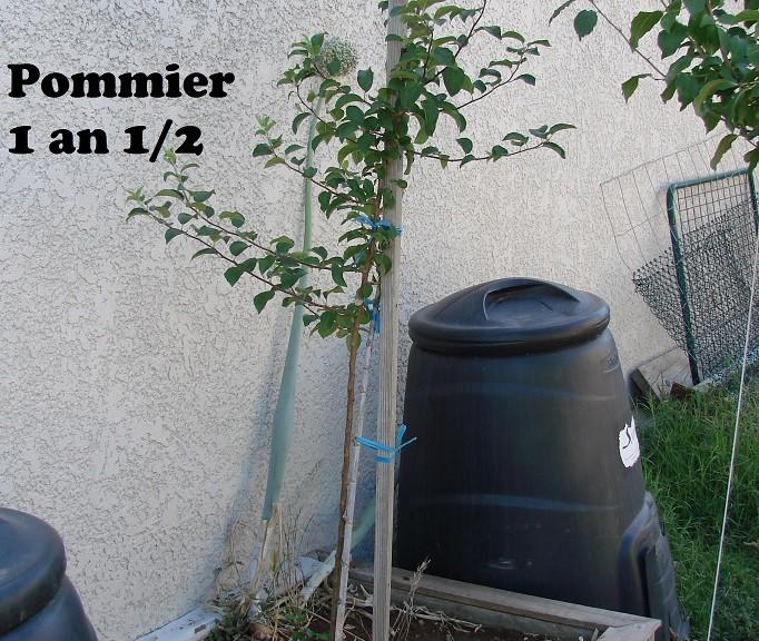 Pommier 1 an et demi - Bac Bois Edika - 08-07-2015