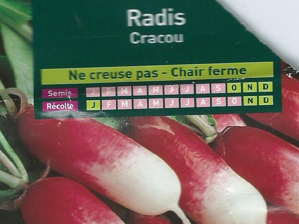 Radis Cracou
