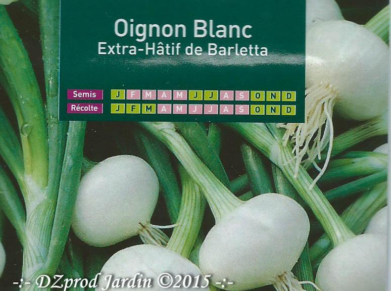 Oignon Blanc Extra-Hâtif de Barletta