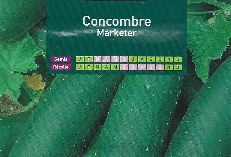 Concombre Marketer