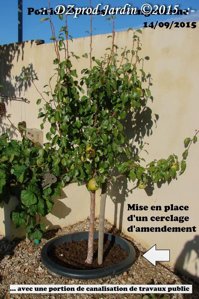 Tour d'arbre de récupération - DZprod Jardin - 14 septembre 2015