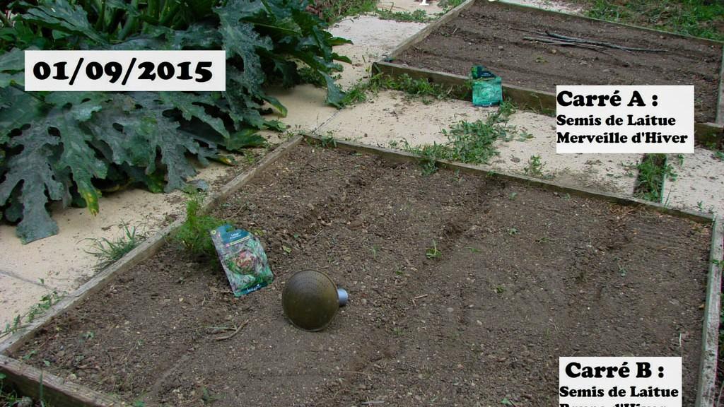 Semis de laitue dans les carrés A et B - DZprod Jardin - 01 septembre 2015