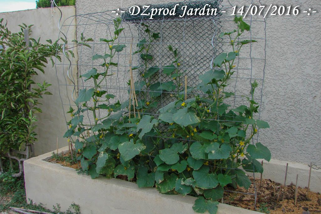 Bac Edika Garage - DZprod Jardin - 14 juillet 2016