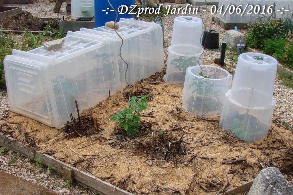 Bac pentagone - DZprod Jardin - 04 juin 2016
