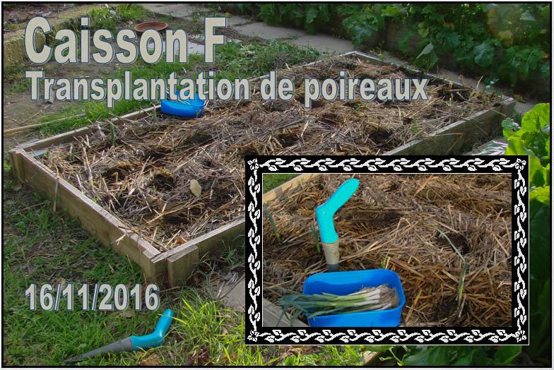 Caisson F - Transplant de poireaux - Loucascarelet 16-11-2016