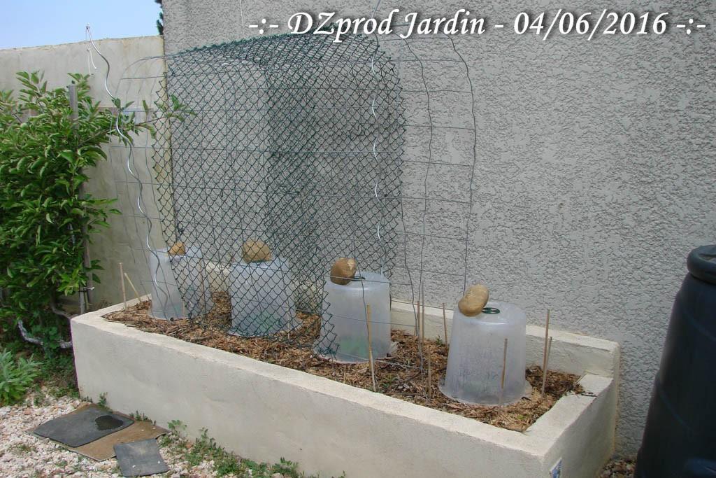 Concombre - Bac Edika garage - DZprod Jardin - 04 juin 2016
