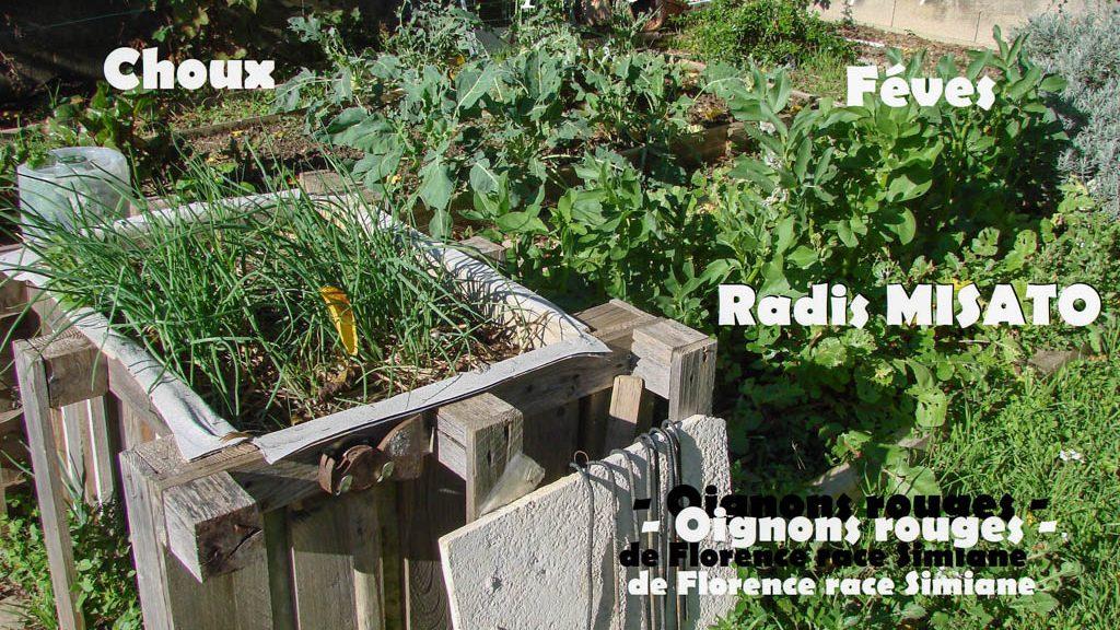 Bac surélevé B - jardin Loucascarelet 07-novembre-2016