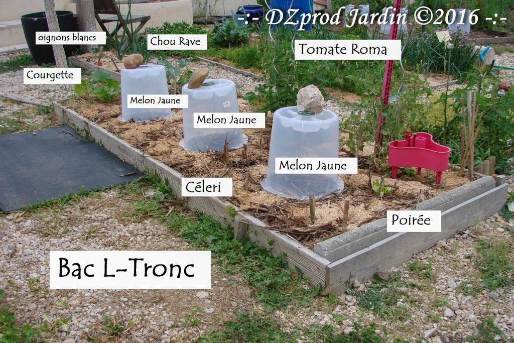 Permaculture - Bac L-Tronc en polyculture - DZprod Jardin - 25 mai 2016