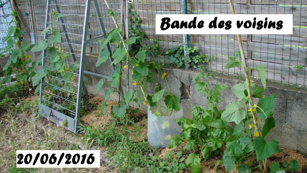 Bande des voisins - Loucastarelet - 20 juin 2016