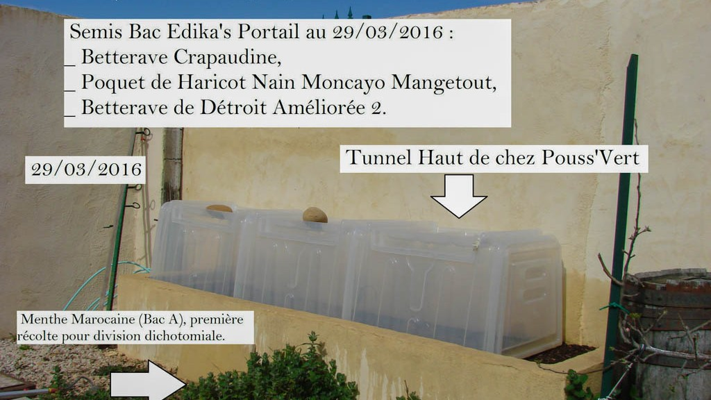 Semis sous tunnel dans le Bac dika Portail - DZprod Jardin - 29 mars 2016