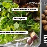 Salade offerte aux voisins Sandra & Stéphane - DZprod Jardin - 14 mars 2016