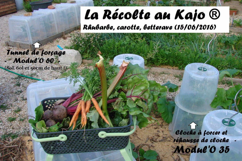 Kajo plein et plein de cloches ModulO - DZprod Jardin - 15 juin 2016