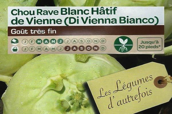 Chou Rave Blanc Hâtif de Vienne