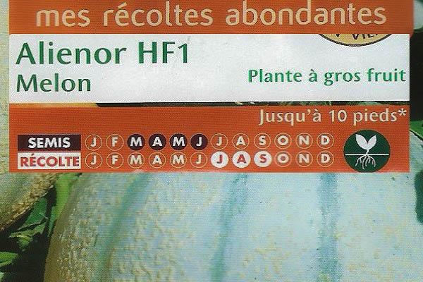 Melon Alienor HF1