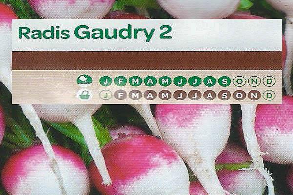 Radis Gaudry 2