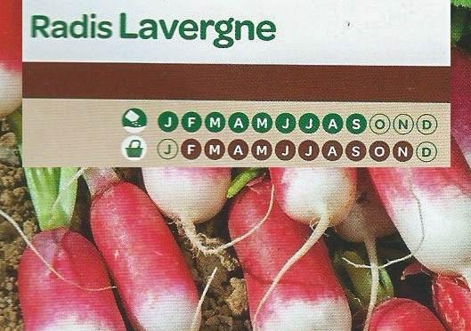 Radis Lavergne