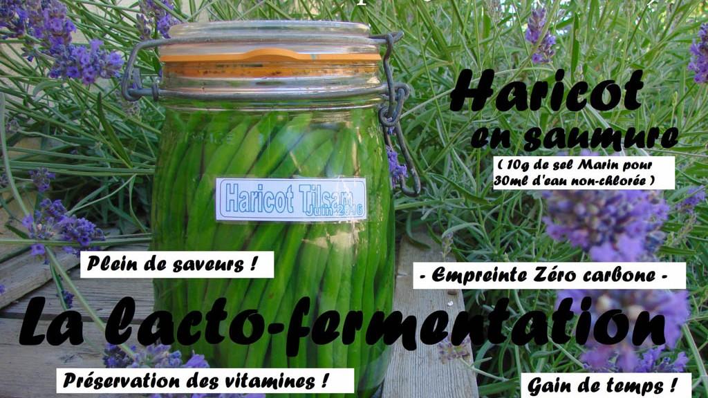 Lacto-fermentation Haricot du jardin - DZprod Jardin - 23 juin 2016