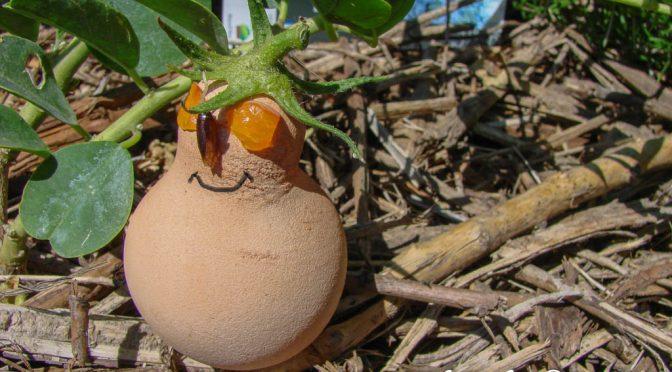 L'œuf de Pâques