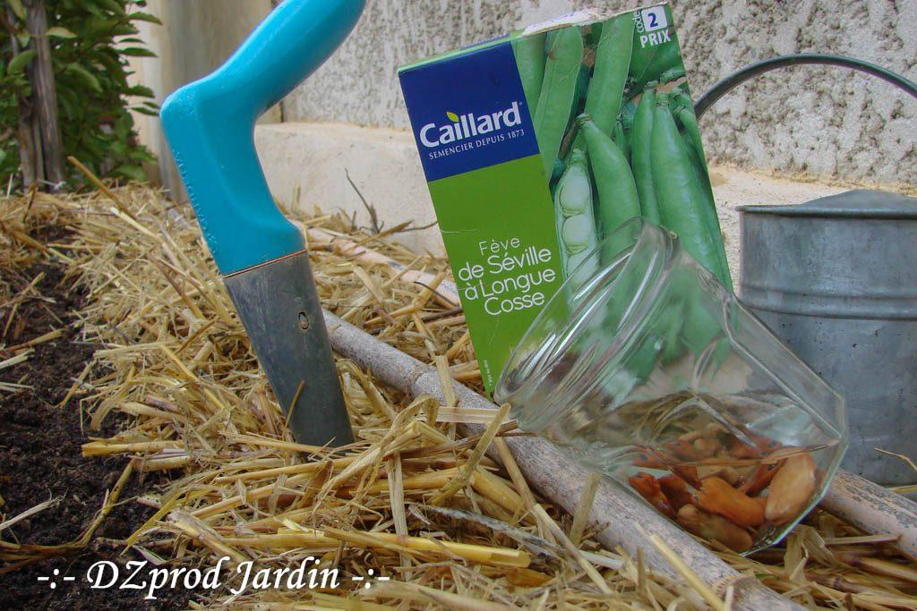 semis-feve-bac-edika-garage-dzprod-jardin-15-septembre-2016
