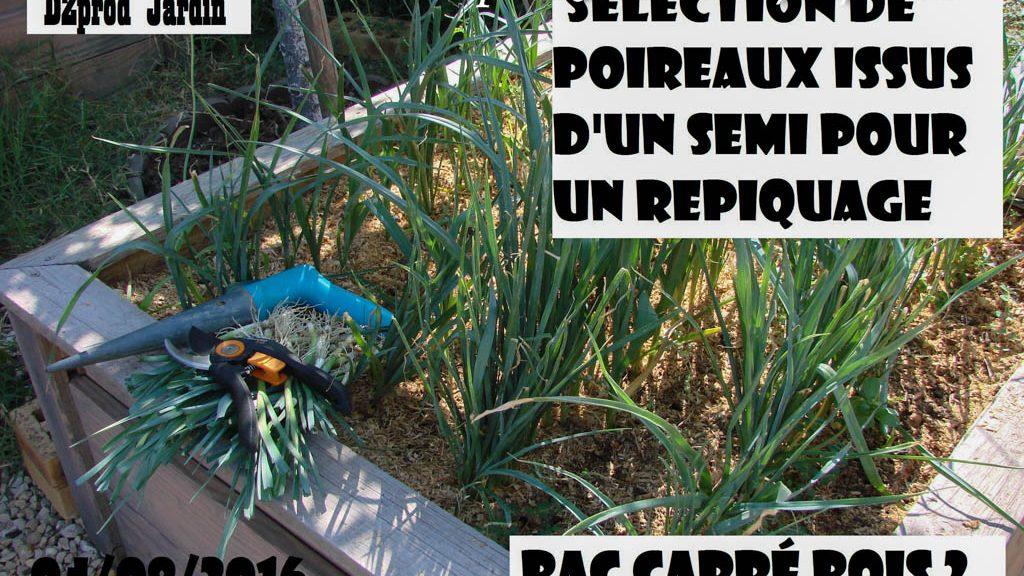 Semi de poireau du BacBois2 - DZprod Jardin - 04 août 2016