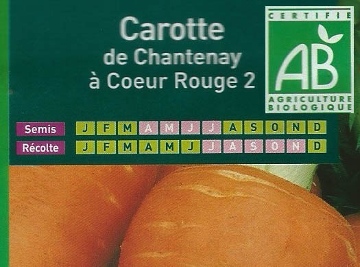 carotte-de-chantenay-a-coeur-rouge-2
