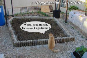 Le chat devant le bac AB -dzprod-jardin-04-octobre-2016