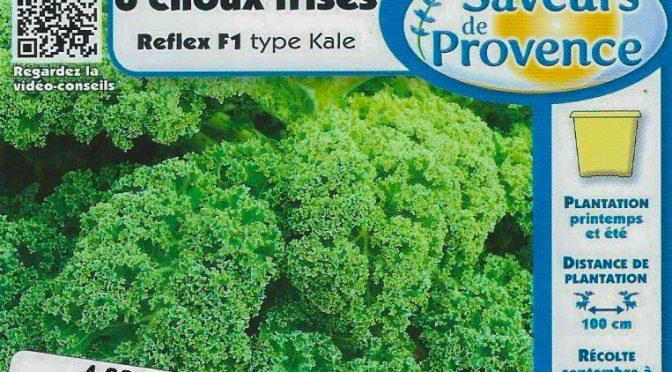 Chou frisé Reflex F1 Type Kale