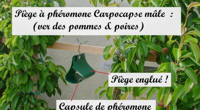 TEST – Piège à phéromone – ALGOFLASH NATURASOL