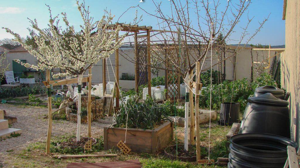 Pruniers - DZprod Jardin - 15-03-2017