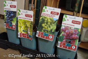 4 pieds de vigne - DZprod Jardin - 28 novembre 2016