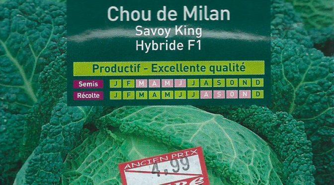 Chou de Milan Savoy King Hybride F1