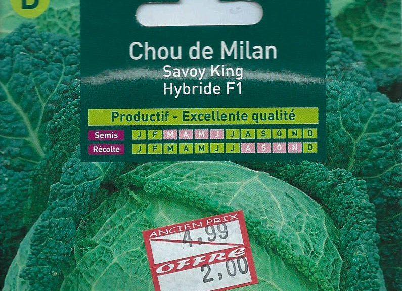 chou-de-milan-savour-king-hybride-f1