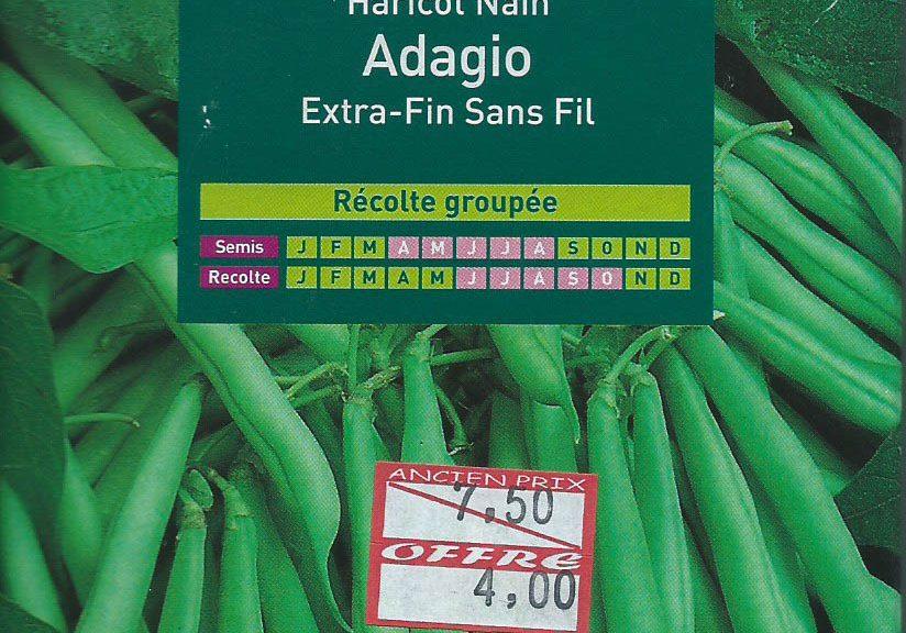 haricot-nain-adagio-extra-fin-sans-fil